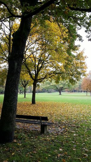 Herbststimmung Park Tranquility No People Nature Autumn Colors Parkbank Weitblick Solitude Solitary Speyer, Germany