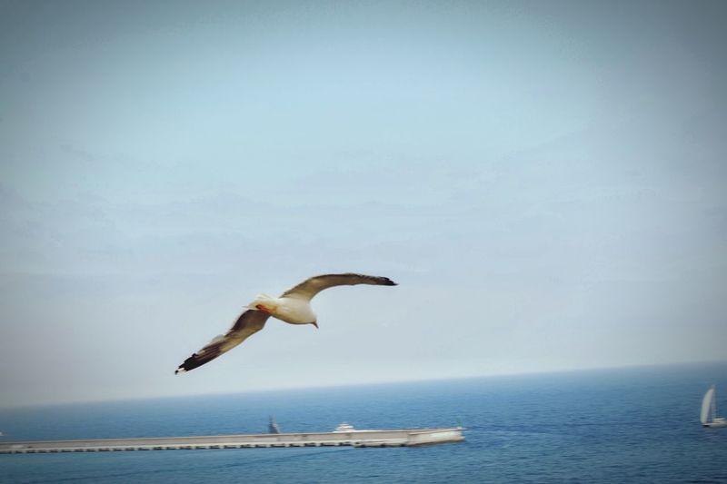Freedom Sea
