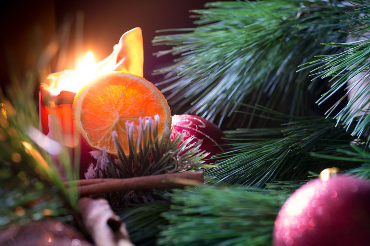 Christmas Candle Flame Tree Christmas Tree Christmas Decoration Christmas Ornament Close-up Decoration Celebration Tradition MerryChristmas Christmas Christmas Lights Flamme Merry Christmas🎄🎅🏻 Candlelight Winter Kerzenlicht Kerze Flame Merry Xmas! Christmas Time Weihnachtszeit Makro