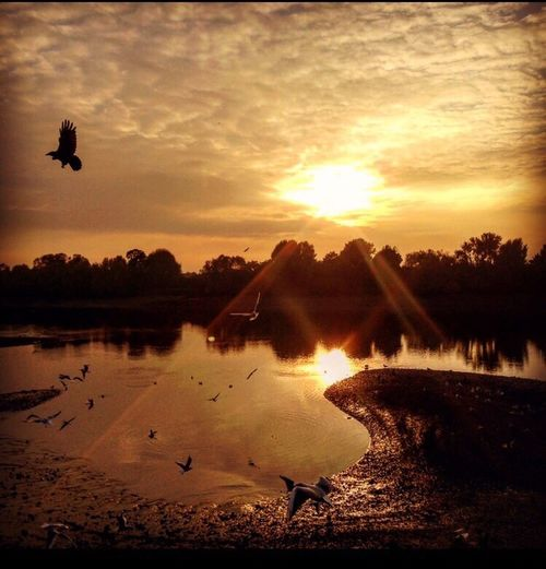 EyeEmNewHere Bird Sunset Animals In The Wild Water Animal Themes Flying Silhouette Nature Animal Wildlife Beauty In Nature Large Group Of Animals Flock Of Birds Sky Motion Lake Scenics Outdoors Tree Cloud - Sky No People Postcode Postcards