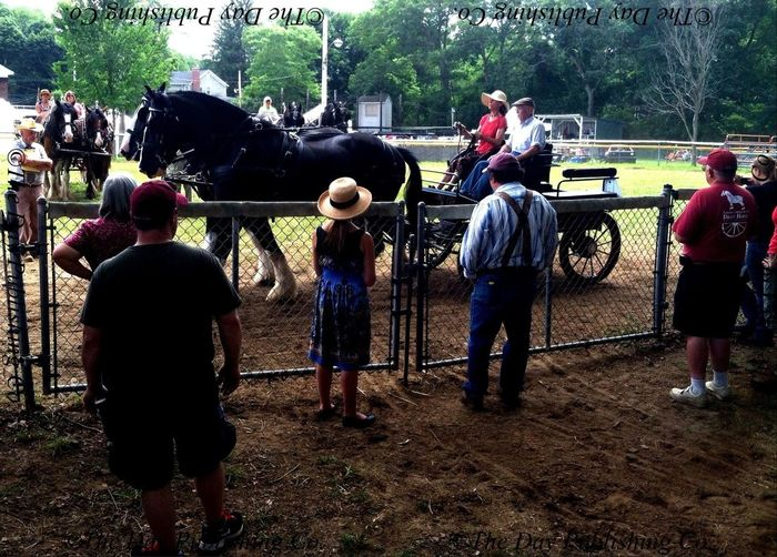 Women's hitch class draft horse competition.