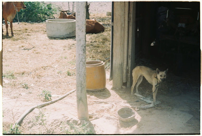 35mm Film Animal Themes Day Dog Domestic Animals Domestic Cat Feline Mammal No People One Animal Outdoors Pets