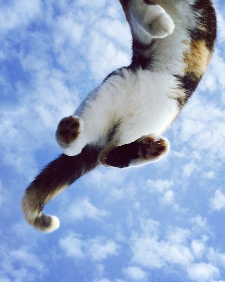 Cat on a window against a blue, cloudy sky Low Angle View One Animal Sky No People Cat Window Skylight Tortoiseshell Cat Clouds And Sky Animal Themes Day Close-up Pet Look Up Summer Pet Portraits