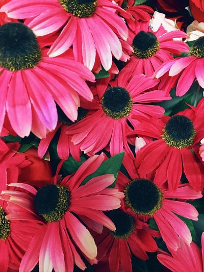 Flower Fragility Petal Freshness Growth Flower Head Beauty In Nature No People Nature Pollen Plant Day Blooming Outdoors Close-up Eastern Purple Coneflower