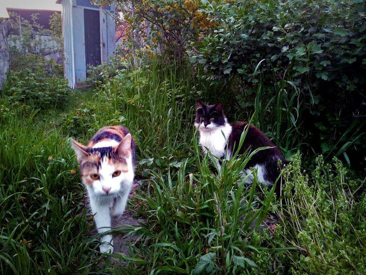 Looking At Camera Animal Themes Grass No People Pets Outdoors Day Nature красиво Life Tree Во дворе Nature Cat Cats кот Коты кошки