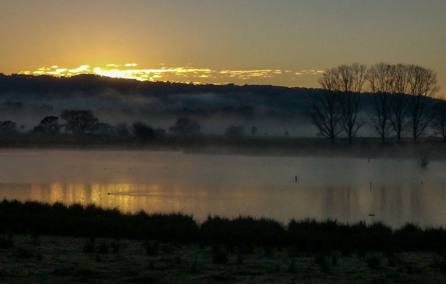 Foggy Morning- Bega NSW Australia A New Day Begins Australia Serenity Beauty In Nature Bega Day Foggy Foggy Morning Grass Lake Lakeside Landscape Nature No People Outdoors Reflection Scenics Silhouette Sky Steam Rising Sunrise Tranquil Scene Tranquility Tree Water