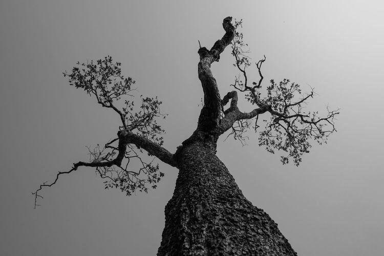 Tree alone.