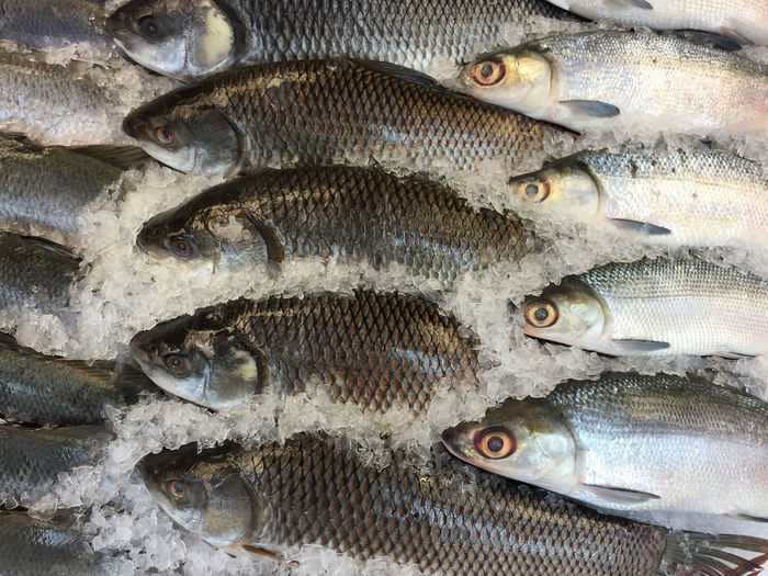 Full frame shot of fish in ice at market stall