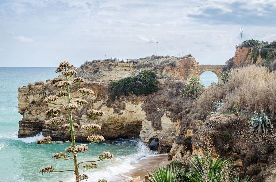 Rock - Object Sea Rock Formation Nature Water Sky Scenics Day Beauty In Nature Tranquility Outdoors Algarve The Week On EyeEm Lagos Ponta Da Piedade Horizon Over Water No People Cliff Landscape Beach Tree Architecture