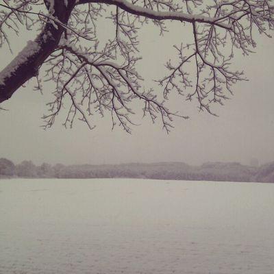 Snowy impressions.