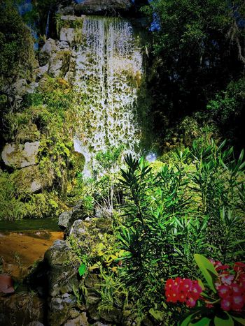 Secluded, idyllic man-made landscape 🤷🏼‍♀️ Legoland Florida Cypress Gardens Landscape Man-made Tropical Nature Water Beauty In Nature Waterfall Rock - Object Plant Forest Outdoors Tranquility Scenics No People Tranquil Scene Freshness Day Growth
