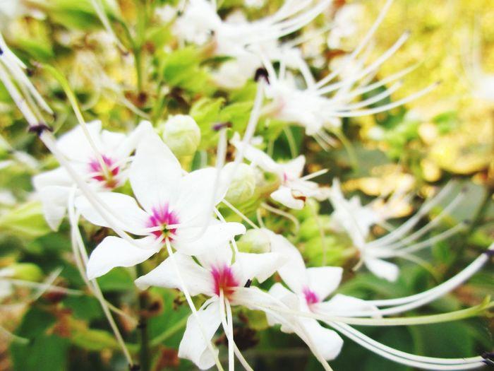 Flower Head Flower Springtime Tree Blossom Close-up Plant