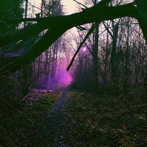 Mystic Woods by SkyzZz789 First Eyeem Photo