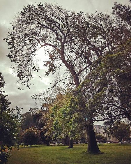 Gloomy day🌁 = Naturesbeauty 😍 in Sanfrancisco 🌳🌳🌳 Panhandle HAIGHTASHBURY Californialiving CaliLife California Sflife Goldengatepark ILOVESF Sanfrancitizens Sf_insta Sfdreaming Karlthefog☁️