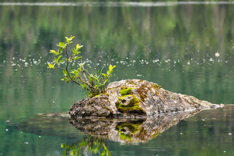 EyeEmNewHere Animal Animal Head  Animal Themes Animal Wildlife Animals In The Wild Crocodile Day Focus On Foreground Lake Nature No People One Animal Outdoors Plant Reflection Reptile Swamp Swimming Vertebrate Water Waterfront