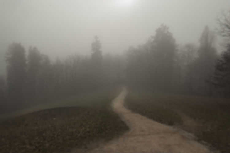 Road amidst trees against sky during foggy weather