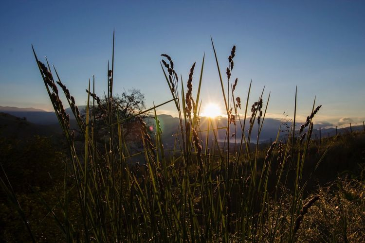 Sunrise Growth Plant Sky Beauty In Nature Tranquility Nature Tranquil Scene Sunlight No People Sunbeam Sun Field Lens Flare Land Scenics - Nature Grass Outdoors