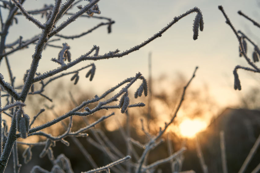 frosty sunrise Tree Brench Plant Winter Cold Temperature Frosty Selective Focus Close-up Nature Beauty In Nature Sun Sunrise Sunrise Memories Colors Lucky's Colors Lucky's Memories Sky Growth Melancholy Landscape Tranquility Depth Of Field Bokeh Ice Crystals Light And Shadow