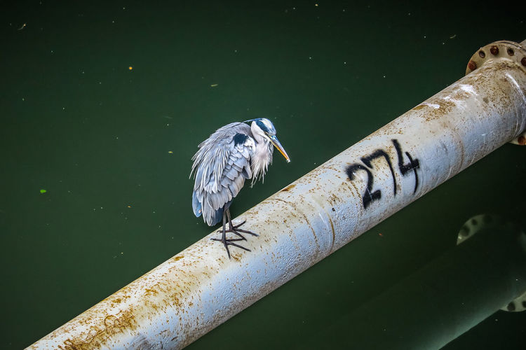 High angle view of bird perching on a canal