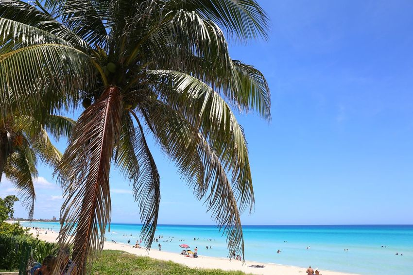 Varadero Beach - Cuba Cuba Canon EOS 5D MarkIII Sea Beach Tree Horizon Over Water Blue Water Summer Sand Nature Vacations Beauty In Nature Palm Tree Tropical Climate Sky Scenics Outdoors Tranquil Scene Tranquility Day Travel Destinations Clear Sky Nature