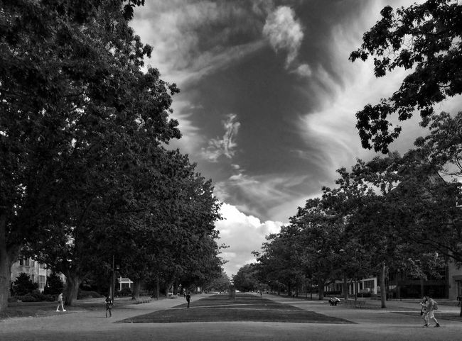 Nature On Your Doorstep Blackandwhite Monochrome Landscape Sky And Trees Clouds And Sky Shades Of Grey