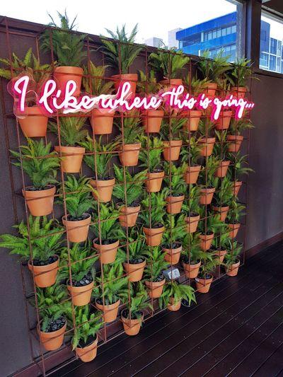 Neonsign Potplantporn Rydges Hotel Rooftopbar EyeEm Best Shots Picoftheday