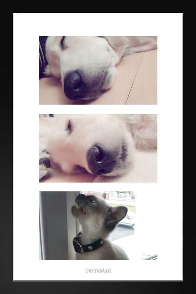 I Love Pets tonny♡era♡çakıl♡