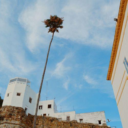 Palm Trees Palm