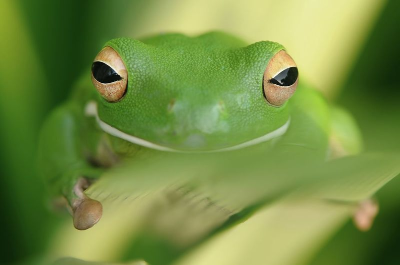 Close-up portrait of green frog on plant
