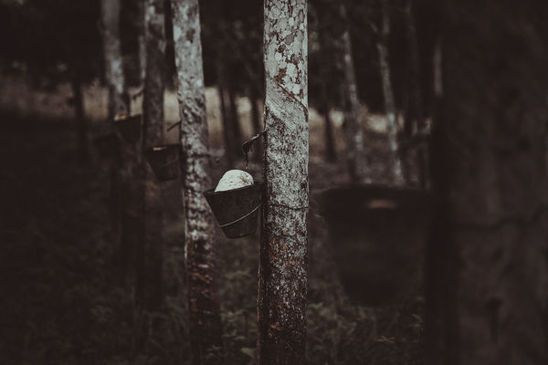 rubber plantation Rubber Plantation Abandoned Bad Condition Close-up Damaged Day Focus On Foreground Indoors  Metal No People Rusty
