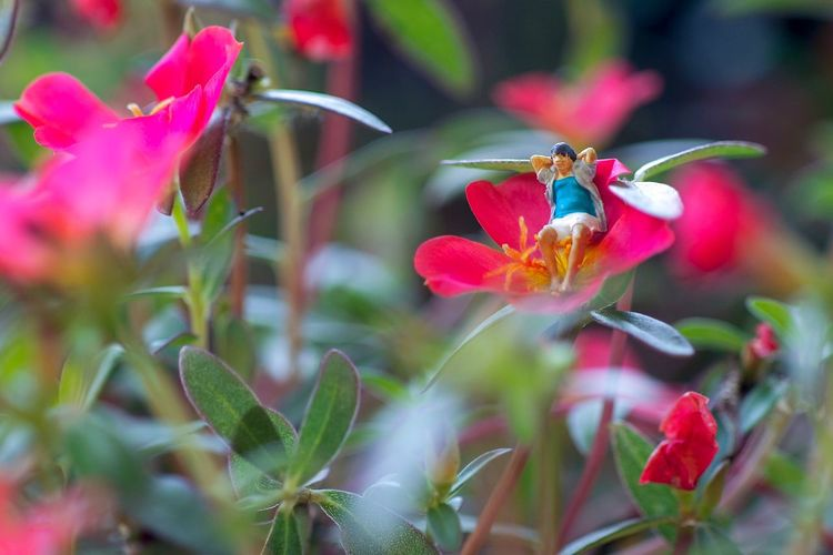 Close-up of insect on red flowering plant