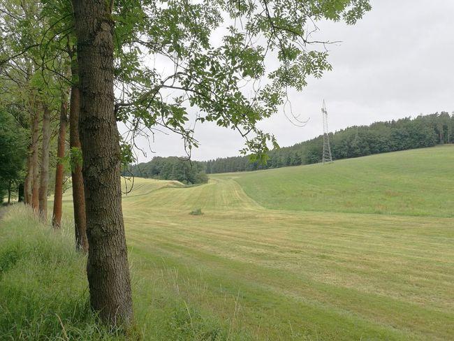 Tree Rural Scene Sky Grass Landscape