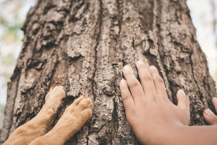 Cropped Human Hands And Dog Paws Touching Tree Trunk