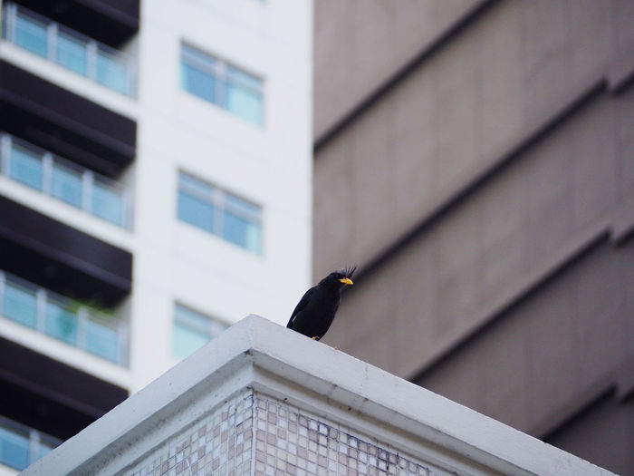 Low angle view of bird perching on building