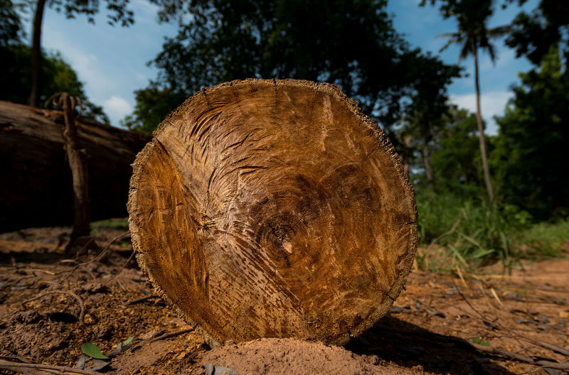 Axe Close-up Day Deforestation Field Forestry Industry Log Lumber Industry Nature No People Outdoors Sky Timber Tree Tree Ring Tree Stump Tree Trunk Wood - Material Woodpile Environmental Issues