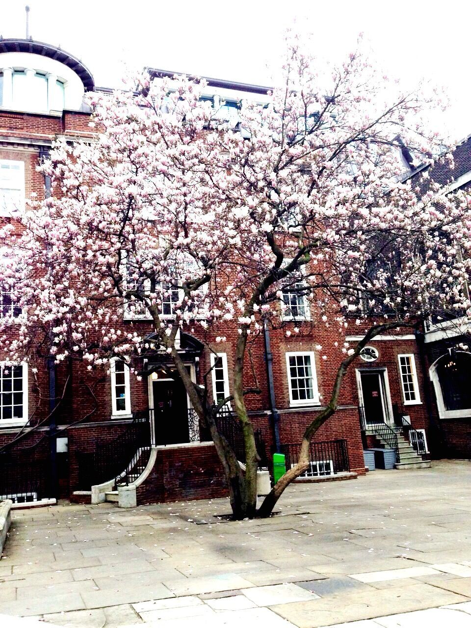 Flower Tree In Front Of Built Structures