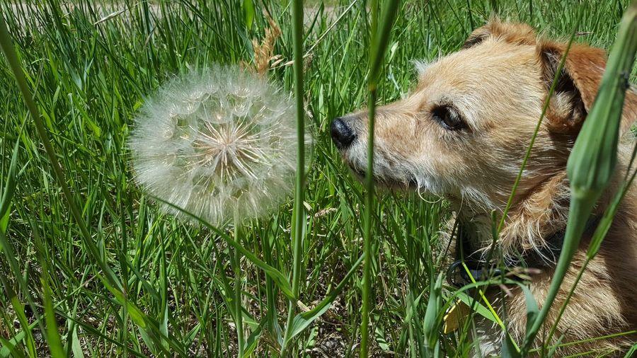 Dog Life Big Sky Country Montana Usa Taking Photos Enjoying Life Montanamoment