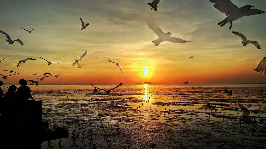 Sunset Sky Bird Nature Beauty In Nature Life Is Beautiful Htcphotography Travel HTC_photography Mylife HTC One M9 ความทรงจำผ่านมือถือ Htcthailand Photographer Enjoying Life Lifeisbeautiful Slowlife Sun Sea