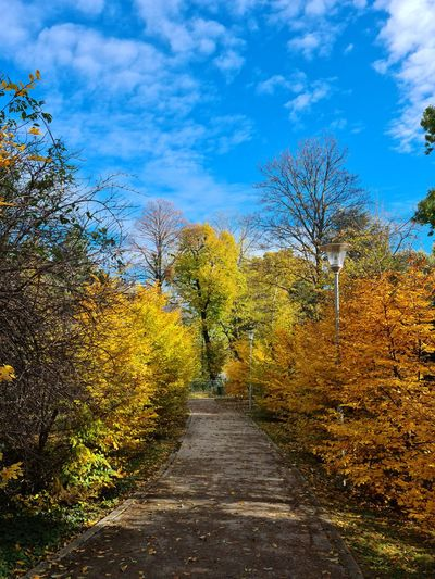 Footpath amidst trees against sky during autumn