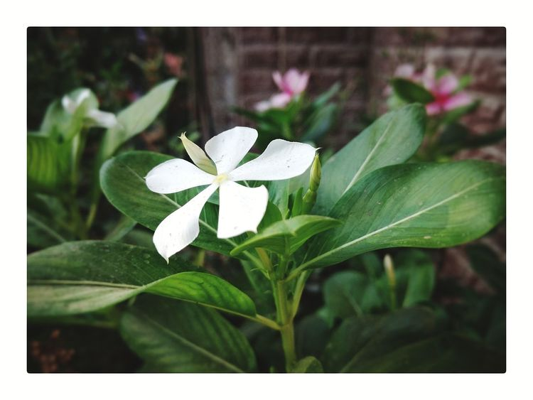 Flower Close-up Flower Head Freshness Petal Green Color White Flower Beauty In Nature Outdoors