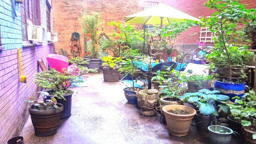 Urban oasis in NYC. Garden Photography Garden Gardening Urban Nature Garden Decor Garden Architecture Garden Love Garden Decoration Gardens Garden_world