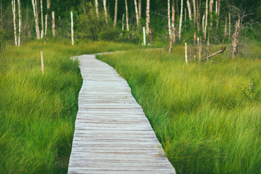 Swamp walk Beauty In Nature Boardwalk Day Diminishing Perspective Direction Field Footpath Grass Green Color Land Landscape Long Nature No People Outdoors Plant Scenics - Nature Swamp Walk The Way Forward Tranquil Scene Tranquility Tree Wood Wood - Material Wood Paneling