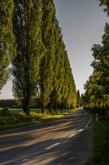 Beauty In Nature Clear Sky Country Country Road Day Diminishing Perspective Direction Green Color Growth Nature No People Outdoors Plant Road Sign Sky The Way Forward Tranquil Scene Tranquility Transportation Tree Treelined