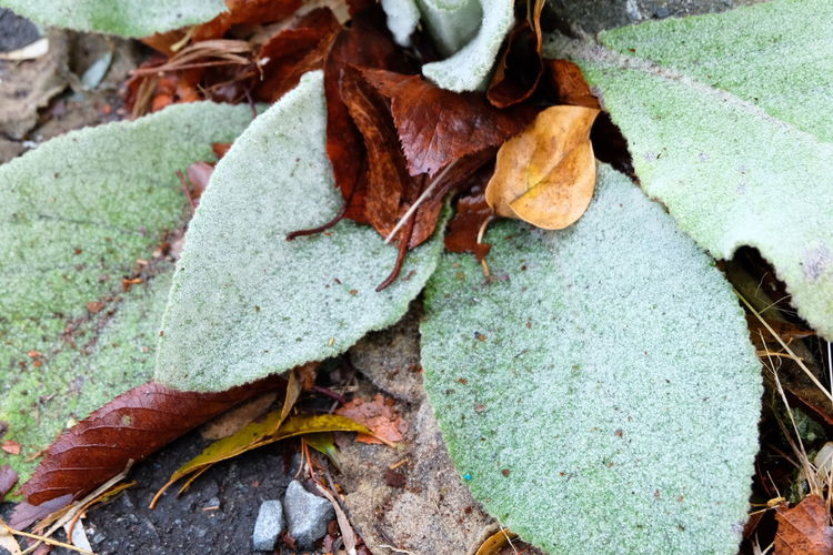 Leaf Day Outdoors Nature No People Change Close-up Autumn Beauty In Nature Fragility