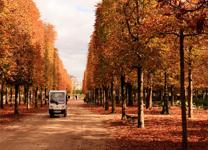 If Trees Could Speak Iftreescouldspeak France Paris ❤ Autumn Beauty In Nature Branch Change Day Growth Land Vehicle Leaf Mode Of Transport Nature No People Outdoors Scenics Sky Tourist Destination Transportation Travel Destinations Tree