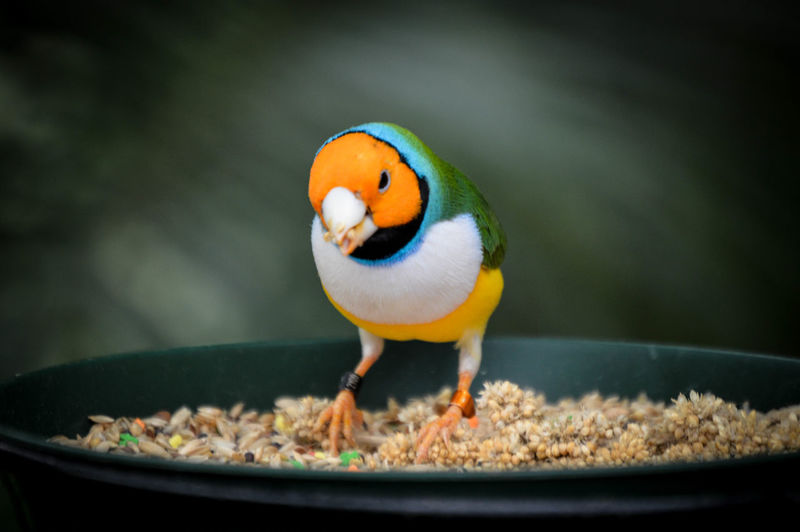 Close-up of bird perching in food bowl