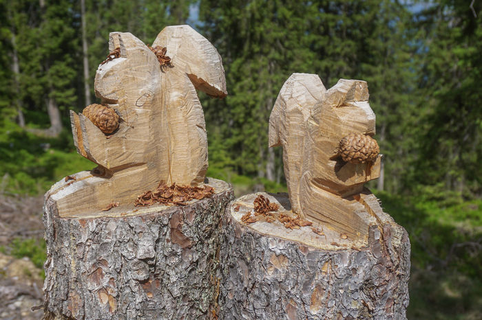 Encountered these 2 guys during a mountain hike near Filzmoos Pine Squirrel Close-up Day Forest Nature No People Outdoors Pine Tree Tree Tree Stump Tree Trunk Wood Sculpture Woodwork