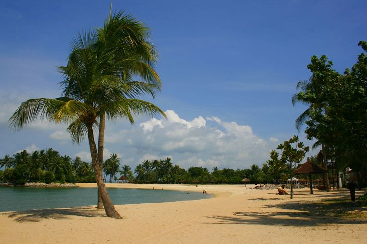 A palm lined beach on Sentosa Island in Singapore ASIA Travel Photography Tropical Paradise Beach Beauty In Nature Cloud - Sky Day Growth Nature No People Outdoors Palm Tree Sand Scenics Sea Sentosa Island Sky Summer Tourist Destination Tranquil Scene Tranquility Travel Destinations Tree Water