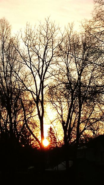 Good Morning My Sunshine Sunlight Daylight Sunshine Sky Treeline In Distance Winter Sunshine Morning Light Trees And Nature Trees And Sky Daybreak Embrace