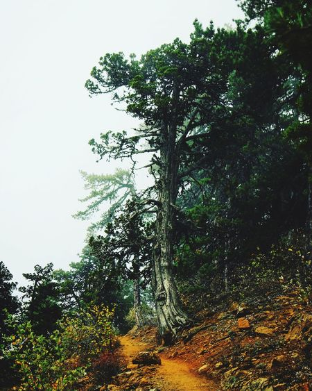 Tree Nature Growth Tranquility Outdoors Beauty In Nature Branch Scenics Sky No People Day